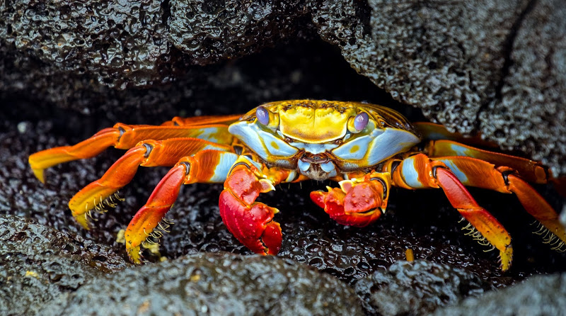 AdSupply CTO - Forrest Parker - Martha Stewart blog - Los Angeles - Galapagos - Sally Lightfoot Crab