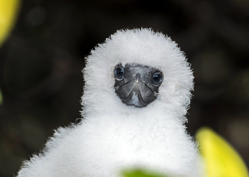 AdSupply CTO - Forrest Parker - Martha Stewart blog - Los Angeles - Galapagos - Red-Footed Booby Chick