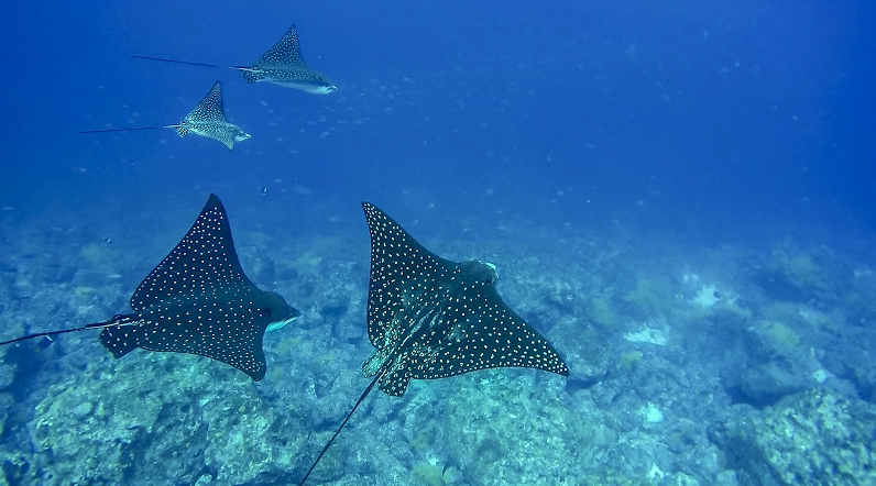 AdSupply CTO - Forrest Parker - Martha Stewart blog - Los Angeles - Galapagos - Spotted Eagle Rays